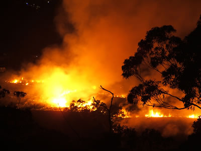 Bush fire at night